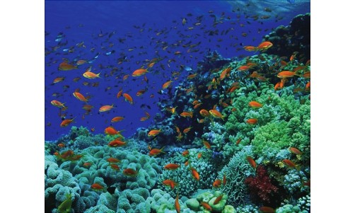 /sharmelsheikhexcursions/131-199-thickbox/snorkeling-boat-trips-and-excursions-to-ras-mohamed-from-sharm-el-sheikh.jpg