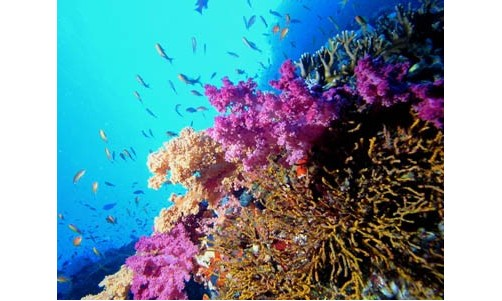 /sharmelsheikhexcursions/141-209-thickbox/boat-trips-and-excursions-to-ras-mohamed-from-sharm-el-sheikh.jpg