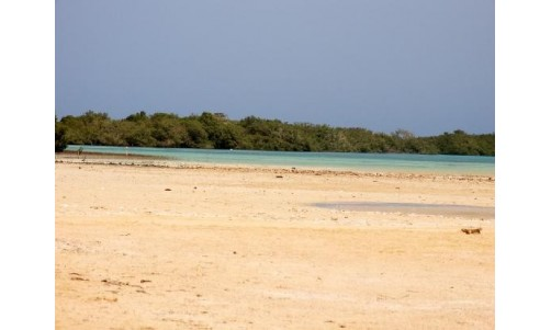 /sharmelsheikhexcursions/144-212-thickbox/safari-tours-to-the-mangroves-of-nabaq-national-park.jpg