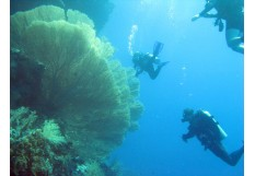 Scuba diving in red sea Sharm El Sheikh - Intro dive from shore (2 dives)