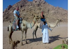 Camel Riding Safari Excursion from Sharm El Sheikh - Riding Camel Trip in Sinai desert Sharm El sheikh Egypt